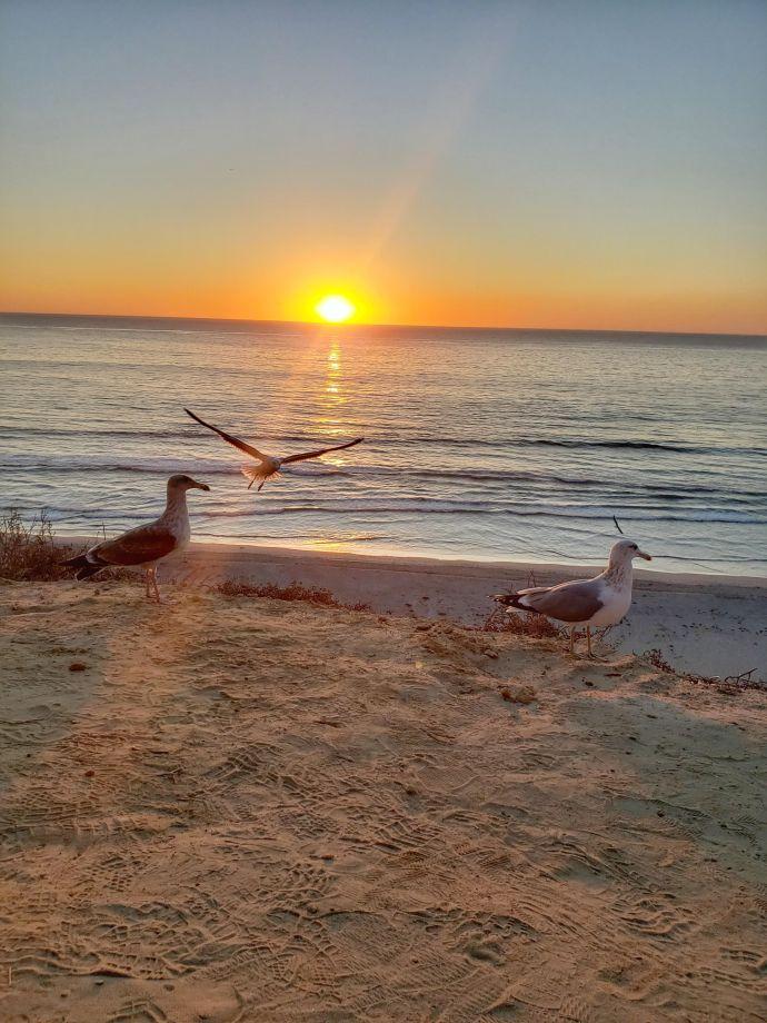 Pôr do sol, Black's Beach